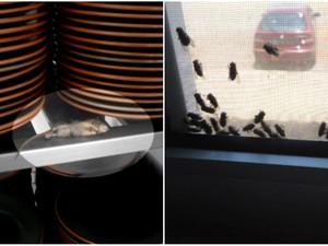Funcionários fizeram fotos de moscas e ratos em refeitório de obra de usina da Odebrecht (Foto: Reprodução/EPTV)