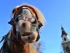 Cavalo faz 'careta' para fotógrafo na República Tcheca
