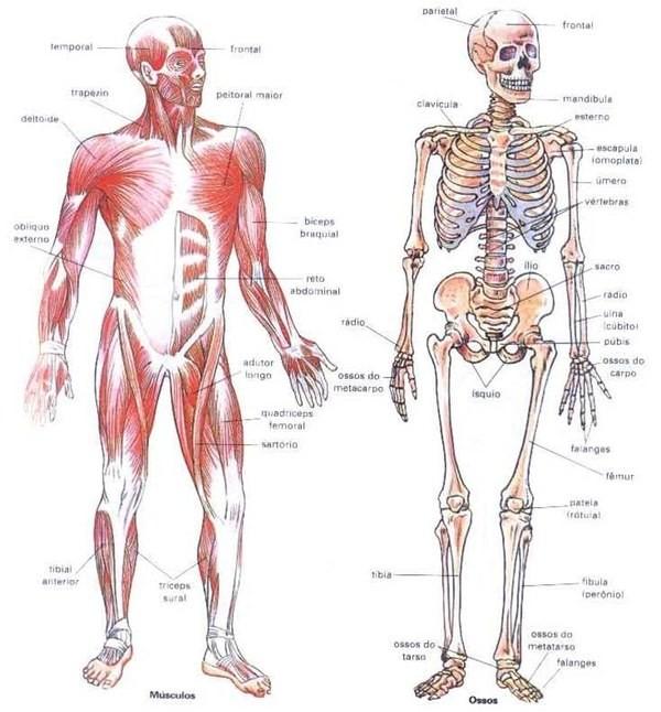 Musculatura e esqueleto Eu Atleta (Foto: Reprodução internet)