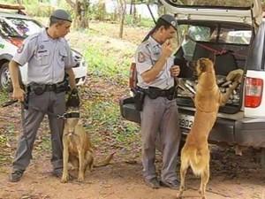 Cães localizaram a droga (Foto: Reprodução/TV TEM)