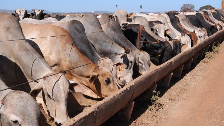 boi-confinamento-cocho-alimentação-animal (Foto: Ernesto de Souza/Ed. Globo)