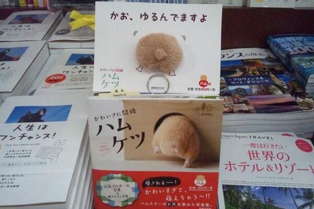Fenômeno foi batizado de hamuketsu, ou a mistura das palavras 'hamster' e 'bumbum', em japonês. (Foto: Reprodução Twitter/Hamuketu_Sebun)