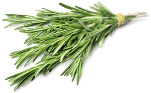 Twig of rosemary (Foto: Getty Images/iStockphoto)