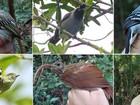Cientistas descobrem 15 novas espécies de aves na Amazônia