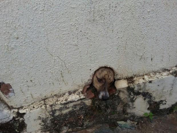 Cachorro ficou com a cabeça presa (Foto: Joãozinho/Rádio Tupã)