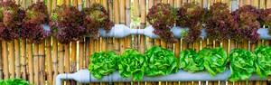 Com hortas verticais, problema da falta de espaço é deixado de lado (Shutterstock)