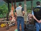 Fiscais acham abatedouros irregulares e destroem 530 kg de carne