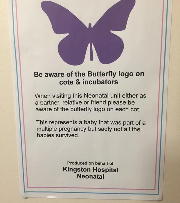 borboleta (Foto: Reprodução/Facebook)