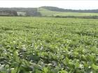 Volume de chuva acima da média preocupa produtores de soja do PR