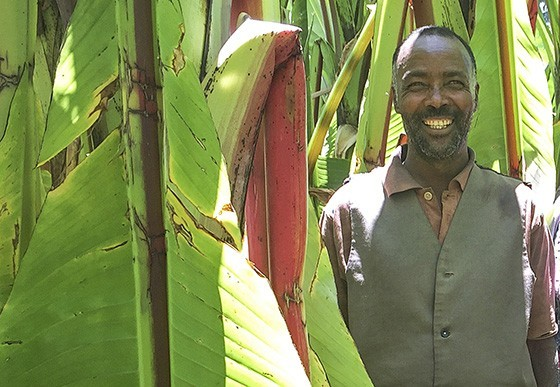 Mikael Babe em sua plantação de ensete em Boricha: ele come kocho três vezes ao dia e todos os dias ao ano  (Foto: © Haroldo Castro/ÉPOCA)