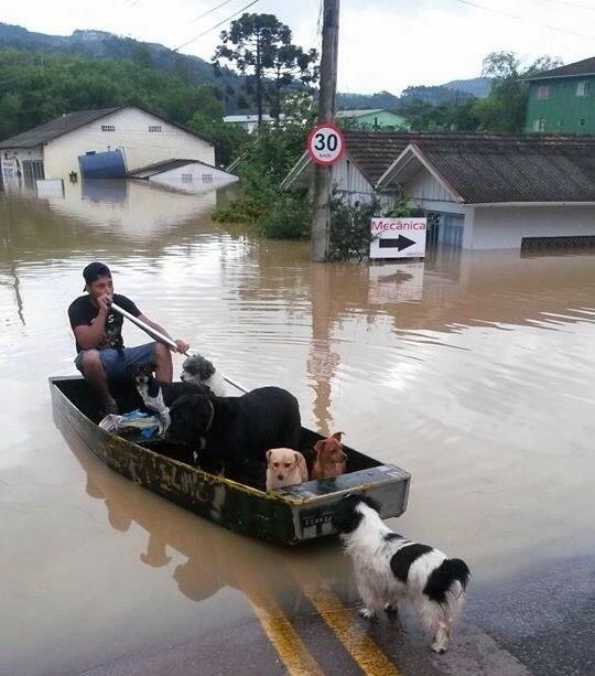 Com ruas alagadas, morador de Rio do Sul resgatou cães  (Foto: Bruna Valle/Divulgação)