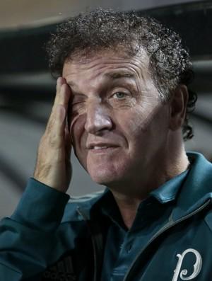 BLOG: Vida real no Palmeiras