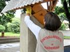 Combate à dengue em Londrina ganha reforço de mais 60 agentes