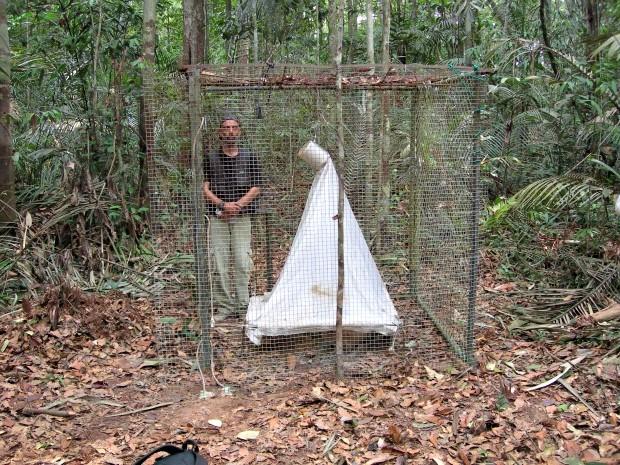Para realizar experimento, pesquisadores isolam área onde cadáver foi encontrado (Foto: Arquivo Pessoal/ Dr. José Albertino Rafael (Inpa))