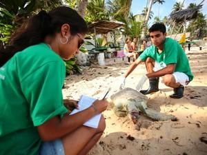 Banhistas disseram que tinha um plástico na boca da tartaruga quando ela foi encontrada. (Foto: Jonathan Lins/G1)