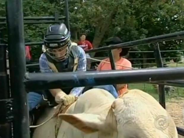 No Brasil uma lei institui normas à atividade. Para que o peão possa exercer a profissão é necessário seguir as regras, principalmente de proteção ao animal. (Foto: Reprodução TV Tem)