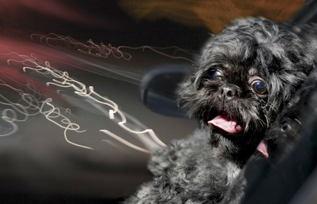 Série fotográfica mostra cachorros na janela do carro (Foto: Lara Jo Regan/Dogs in Cars)