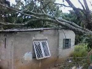 árvore cai em casa em Jacareí (Foto: Arquivo Pessoal/ Fabíula Ramos)
