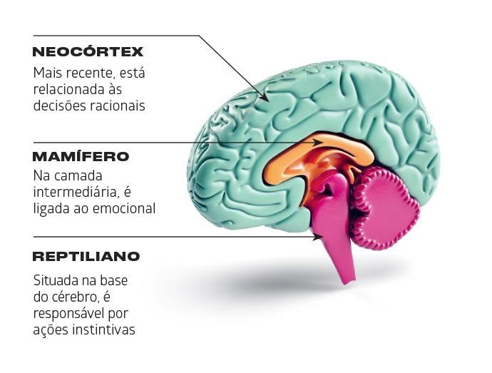 As estruturas cerebrais afetadas (Foto: Marcus Penna)