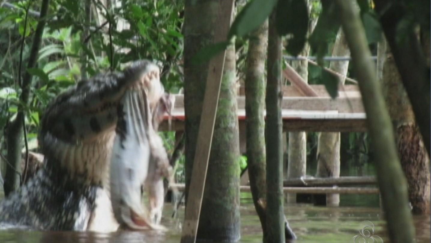 Segundo o empresário, o jacaré media cerca de cinco metros (Foto: Rondônia TV)