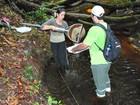 Estudo do Inpa cataloga insetos aquáticos da Amazônia