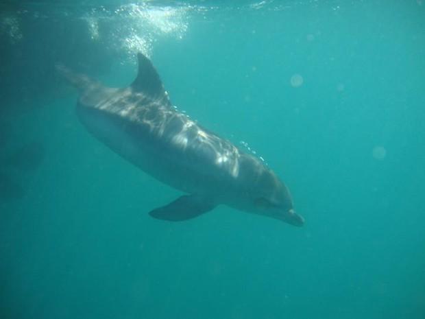 Golfinho volta ao mar após ser encontrado em praia de Ubatuba, SP (Foto: Divulgação/Aquário de Ubatuba)