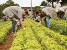Colégio agrícola realiza teste seletivo para curso técnico em Ponta Grossa