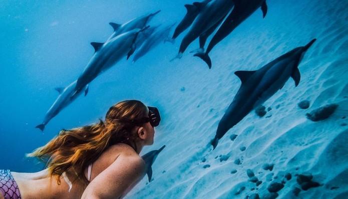 A foto de mergulho se torna mais realista com os golfinhos no fundo. (Foto: Divulgação/GoPro)