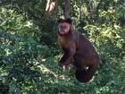 Agentes vistoriam mata onde macaco foi encontrado morto