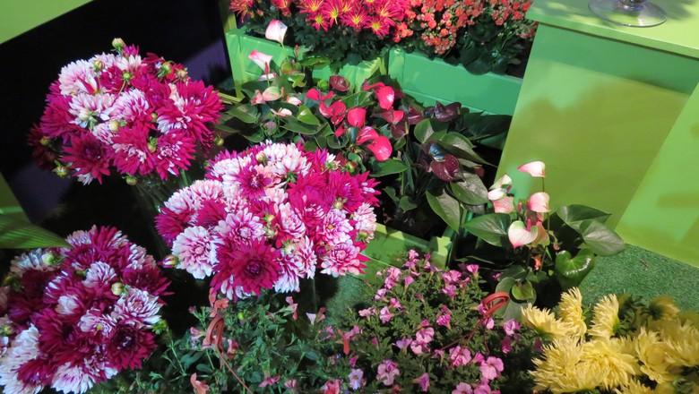 flores-lançamentos-expoflora-2015 (Foto: Fernando Bumbeers/Ed. Globo)