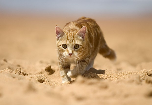 """""""O contato com a areia da praia pode causar uma série de problemas, pois eles também ficam expostos às fezes de outros animais"""", alerta a médica (Foto: Divulgação )"""