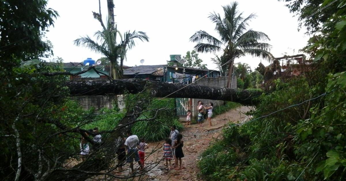 Chuva forte causa queda de árvores em Jacareí e São Sebastião - Globo.com