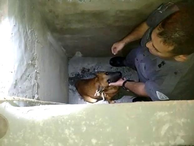 Cachorro foi resgatado de buraco por policiais militares em Guareí (Foto: Divulgação/Polícia Militar)