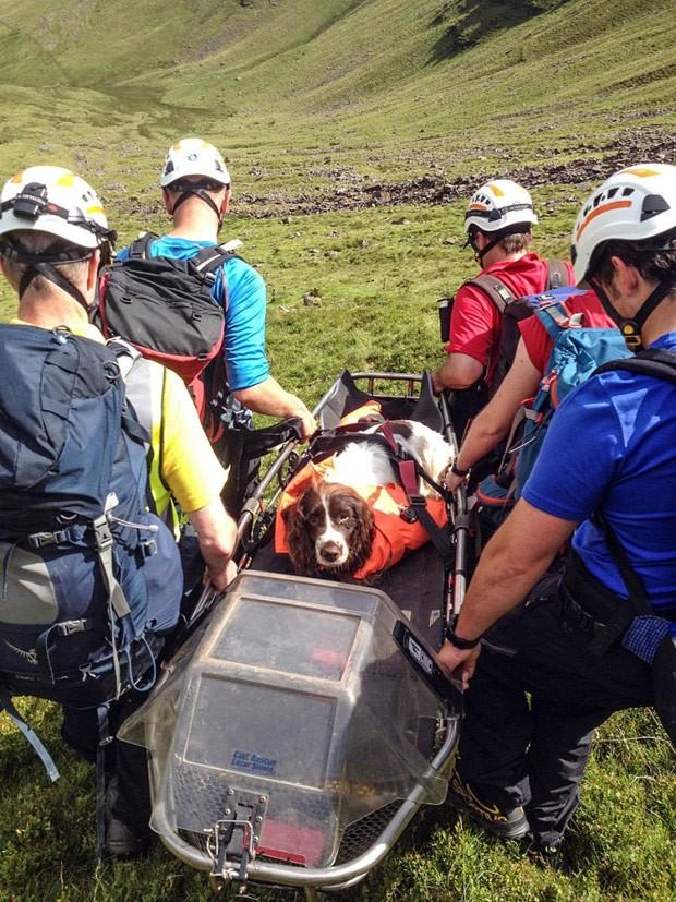 Cão foi resgatado por voluntários após cair de penhasco de quase 200 metros (Foto: Reprodução/Brecon Mountain Rescue)