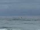 Baleia jubarte aparece na Praia do Recreio, Zona Oeste do Rio