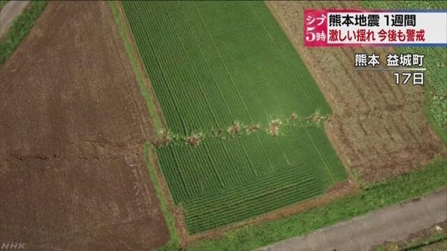 Danos em uma plantação na cidade de Mashiki (Foto: Reprodução/NHK)