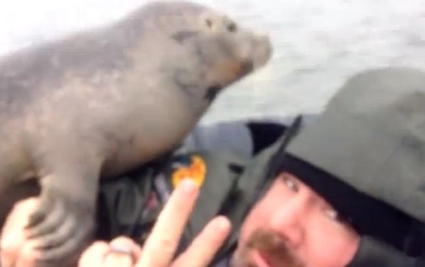 Caçador faz pose ao ganhar 'abraço' de foca (Foto: Reprodução/YouTube/Ocean State Outfitters)