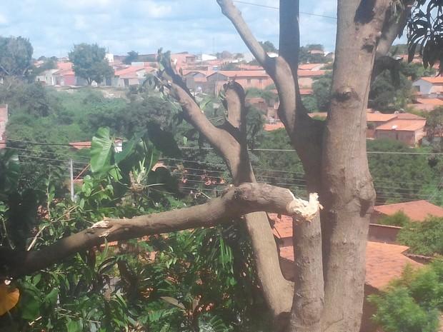 Cidades do PI ficam sem energia por causa de corte irregular de árvore em Teresina (Foto: Divulgação/Eletrobras)