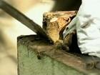 Apicultores investem na produção de própolis verde em Minas Gerais