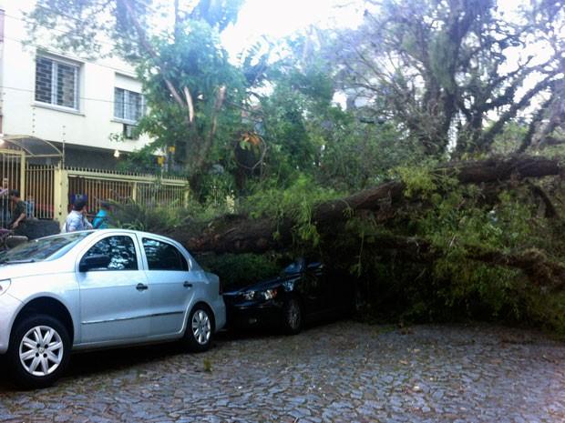 Árvore cai sobre carro em Porto Alegre (Foto: Lucas Coradin/Arquivo Pessoal)