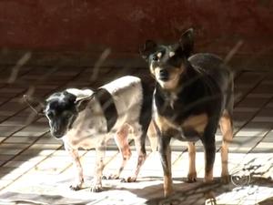 Animais foram resgatados e vivem em casa (Foto: Reprodução/TV TEM)