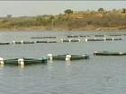 Cooperativa de criação de peixes gera renda para produtores do Piauí