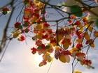 Catarinenses montam árvore de Páscoa artesanal durante Quaresma