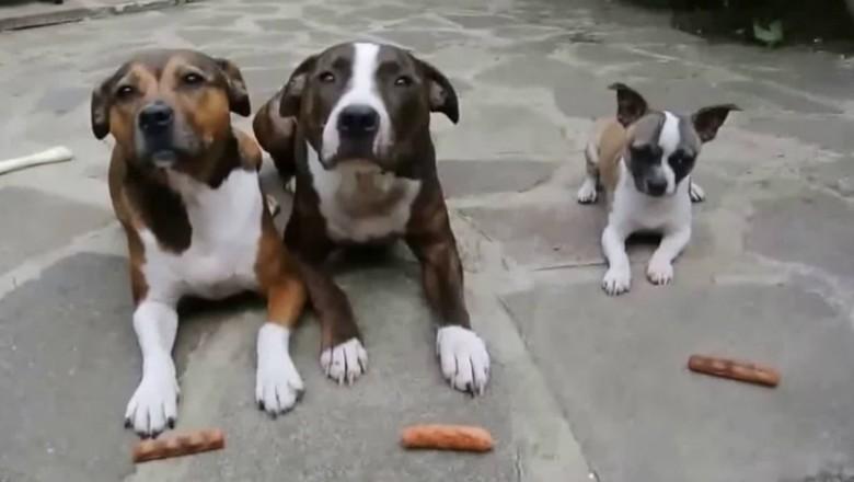 planetabicho_cachorros_petisco (Foto: Reprodução Youtube)