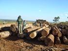 Devastação da Amazônia Legal em Rondônia aumentou 64% em maio