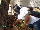 Paulista intensifica ações de combate ao Aedes aegypti junto à população