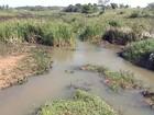 Volume de represas e nascentes aumenta no noroeste paulista