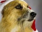 Ensaio fotográfico incentiva adoção de 'animais de rua' em Maceió