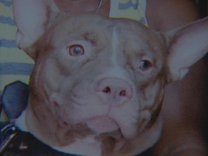 Cão da raça pitbull ataca bebê no Recife (Foto: Reprodução / TV Globo)