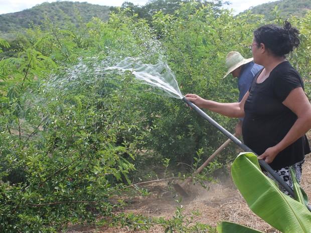Água para mohar a plantação não tem faltado com biágua (Foto: Juliane Peixinho/ G1)